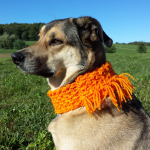 Orange Dog Scarf